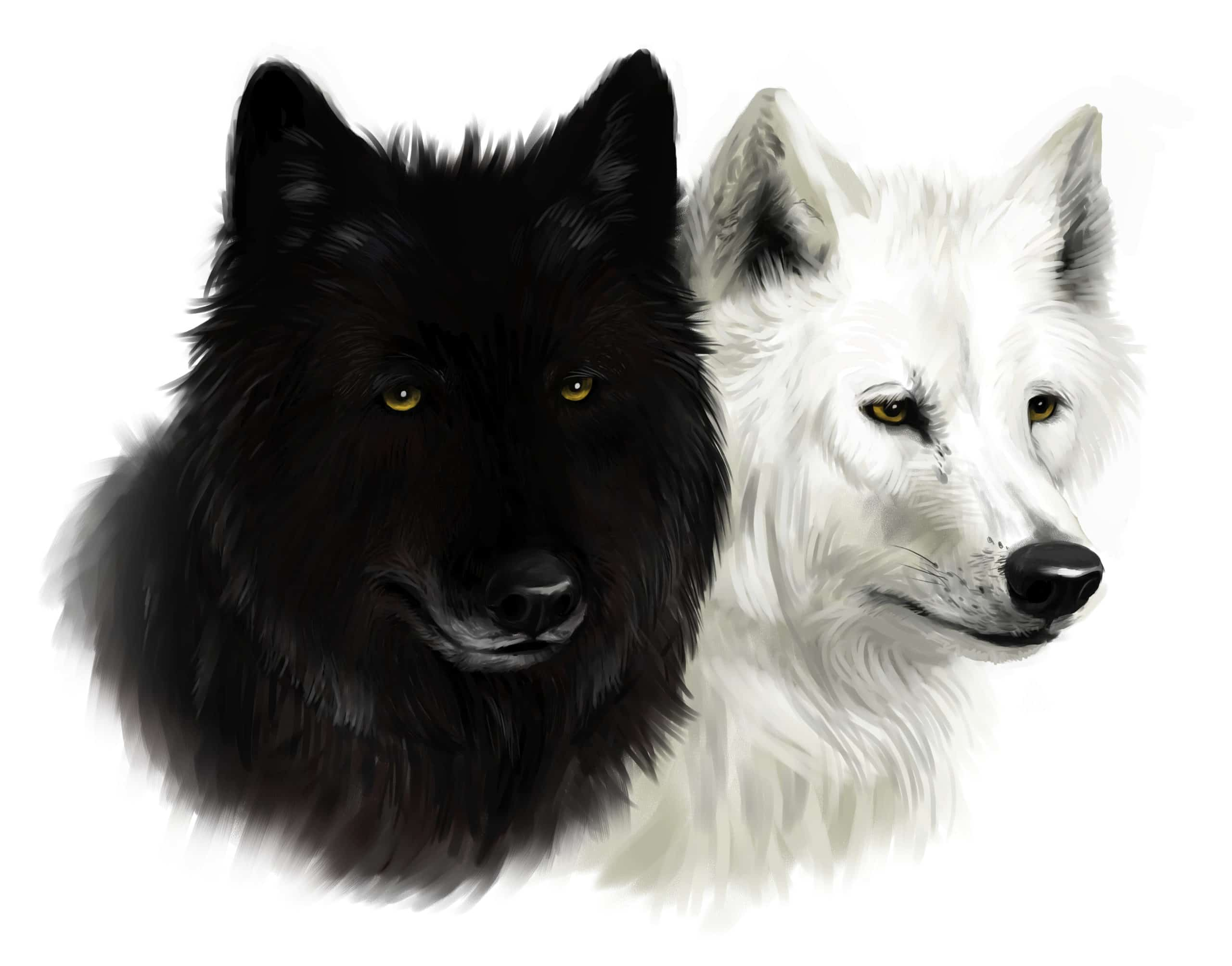 Black wolf and a White wold
