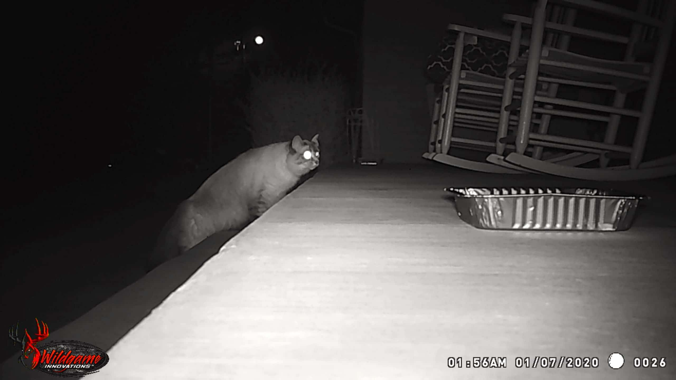 Tom sneaking on the porch for some food.